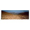 iCanvas Panoramic Sheep Otago New Zealand Photographic Print on Canvas