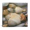 "iCanvas ""Sea Shells"" by J.D. McFarlan Photographic Print on Canvas"