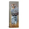 """iCanvas Panoramic """"Tiger Cub Standing up"""" by Pip McGarry Photographic Print on Canvas"""