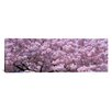 iCanvas Panoramic Washington, D.C, Close-up of Cherry Blossoms Photographic Print on Canvas