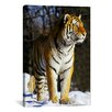 iCanvas Tiger Photographic Print on Canvas