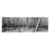 iCanvas Panoramic Snow Covered Trees in a Forest, Alberta, Canada Photographic Print on Wrapped Canvas