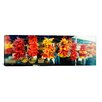 iCanvas Panoramic Strands of Chili Peppers Hanging in a Market Stall, Pike Place Market, Seattle, King County, Washington State Photographic Print on Wrapped Canvas