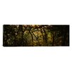 iCanvas Panoramic Sunset over a Forest, Monteverde Cloud Forest, Costa Rica Photographic Print on Canvas