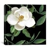 """iCanvas """"Sweet Magnolias II"""" Canvas Wall Art from Color Bakery"""