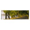 iCanvas Panoramic Trees Along a Road, Lake Washington Boulevard, Seattle, Washington State Photographic Print on Wrapped Canvas