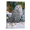 "iCanvas ""Snowy Owl"" Canvas Wall Art by William Vanderdasson"