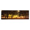 iCanvas Panoramic Trees in a Field, Crissy Field, San Francisco, California Photographic Print on Wrapped Canvas