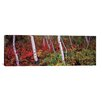 iCanvas Panoramic Trees in a Forest Photographic Print on Canvas