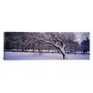 iCanvas Panoramic Trees Covered with Snow in a Park, Central Park, New York City, New York state Photographic Print on Wrapped Canvas