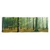 iCanvas Panoramic Woodlands Near Annweiler Germany Photographic Print on Canvas