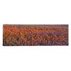 iCanvas Panoramic Texas Bluebonnets and Indian Paintbrushes in a Field, Texas Photographic Print on Canvas
