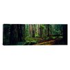 iCanvas Panoramic Trees in a Forest, Hoh Rainforest, Olympic National Park, Washington State Photographic Print on Canvas