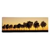 iCanvas Panoramic Tree Alley at Sunset, Hohenlohe, Baden-Wurttemberg, Germany Photographic Print on Wrapped Canvas