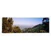 iCanvas Panoramic Trees on a Hill, Sausalito, San Francisco Bay, Marin County, California Photographic Print on Canvas