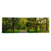 iCanvas Panoramic Trees in a Park, Central Park, New York City, New York State Photographic Print on Wrapped Canvas