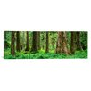 iCanvas Panoramic Trees in a Rainforest, Hoh Rainforest, Olympic National Park, Washington State Photographic Print on Canvas