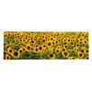 iCanvas Panoramic Sunflowers (Helianthus annuus) in a Field, Bouches-Du-Rhone, Provence, France Photographic Print on Canvas