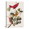iCanvas 'Summer Tanager' by John James Audubon Painting Print on Wrapped Canvas