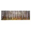 iCanvas Panoramic Birch Trees in a Forest Photographic Print on Wrapped Canvas
