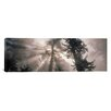 iCanvas Panoramic Trees Redwood National Park, California Photographic Print on Wrapped Canvas