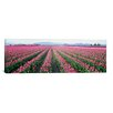 iCanvas Panoramic Tulip Fields, Washington State Photographic Print on Wrapped Canvas