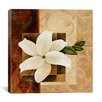 "iCanvas ""White Flower"" by Pablo Esteban Graphic Art on Wrapped Canvas"