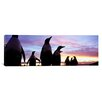 iCanvas Panoramic Group of Gentoo Penguins, Falkland Islands Photographic Print on Canvas