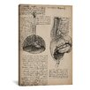 iCanvas 'Sketchbook Studies of Human Organs' by Leonardo da Vinci Graphic Art on Wrapped Canvas