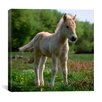 "iCanvas ""White Pony"" by Carl Rosen Photographic Print on Wrapped Canvas"