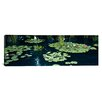 iCanvas Panoramic Water Lilies in a Pond, Denver Botanic Gardens, Denver, Colorado Photographic Print on Wrapped Canvas