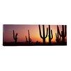 iCanvas Panoramic Saguaro National Park, Tucson, Pima County, Arizona Photographic Print on Wrapped Canvas