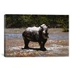 iCanvas 'White Rhino' by Pip McGarry Photographic Print on Wrapped Canvas