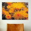 iCanvas Marine and Ocean Orange Cup Coral Photographic Print on Canvas