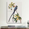 iCanvas 'Fork-tailed Flycatcher' by John James Audubon Painting Print on Canvas