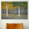 iCanvas 'Dixie Forest, Utah' by J.D. McFarlan Photographic Print on Canvas