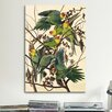 iCanvas 'Carolina Parrot' by John James Audubon Painting Print on Canvas