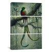 iCanvas Harro Maass Resplendent Quetzal 3 Piece Graphic Art on Wrapped Canvas Set