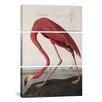 iCanvas John James Audubon Flamingo Drinking At Water's Edge 3 Piece on Wrapped Canvas Set