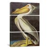 iCanvas John James Audubon American White Pelican 3 Piece on Wrapped Canvas Set