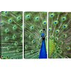 iCanvas Photography Peacock Feathers 3 Piece on Wrapped Canvas Set