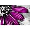 Maxwell Dickson 'Purple Petals' Floral Flower Graphic Art on Wrapped Canvas