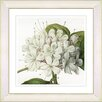 Studio Works Modern Vintage Botanical No. 47W by Zhee Singer Framed Giclee Print Fine Wall Art
