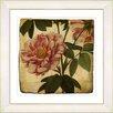 Studio Works Modern Vintage Botanical No. 49A by Zhee Singer Framed Painting Print