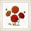 Studio Works Modern Vintage Botanical No. 50W by Zhee Singer Framed Painting Print