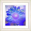 Studio Works Modern 'Daisy Bloom' by Zhee SInger Framed Painting Print in Purple Blue