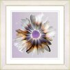 Studio Works Modern Winter Daisy by StudioWorksModern Framed Painting Print in Orange