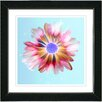 "Studio Works Modern ""Sky Blue Snowflake Daisy"" by Zhee Singer Framed Fine Art Giclee Painting Print"