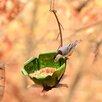 Tulip Tree Blossom Decorative Tray Bird Feeder - Desert Steel Bird Feeders