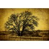 Marmont Hill Roadside Tree by Malek Graphic Art on Wrapped Canvas